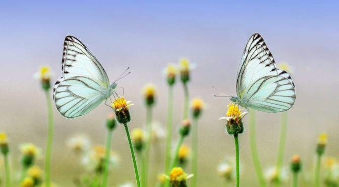 two butterflies looking at each over a field of possibility.